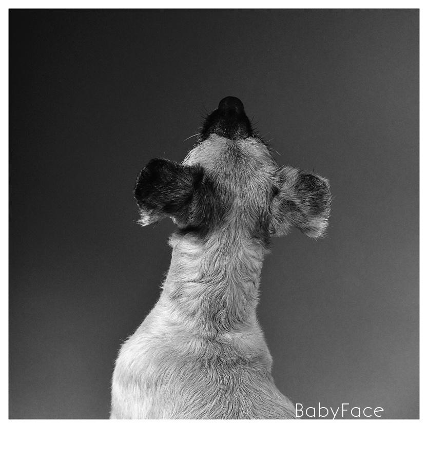 DogArt - fotografia artística de perros en Madrid