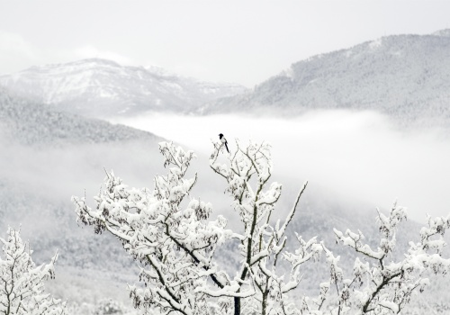 Wild Aragón - From the valley to the mountain