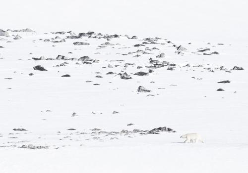Nanook - An arctic story