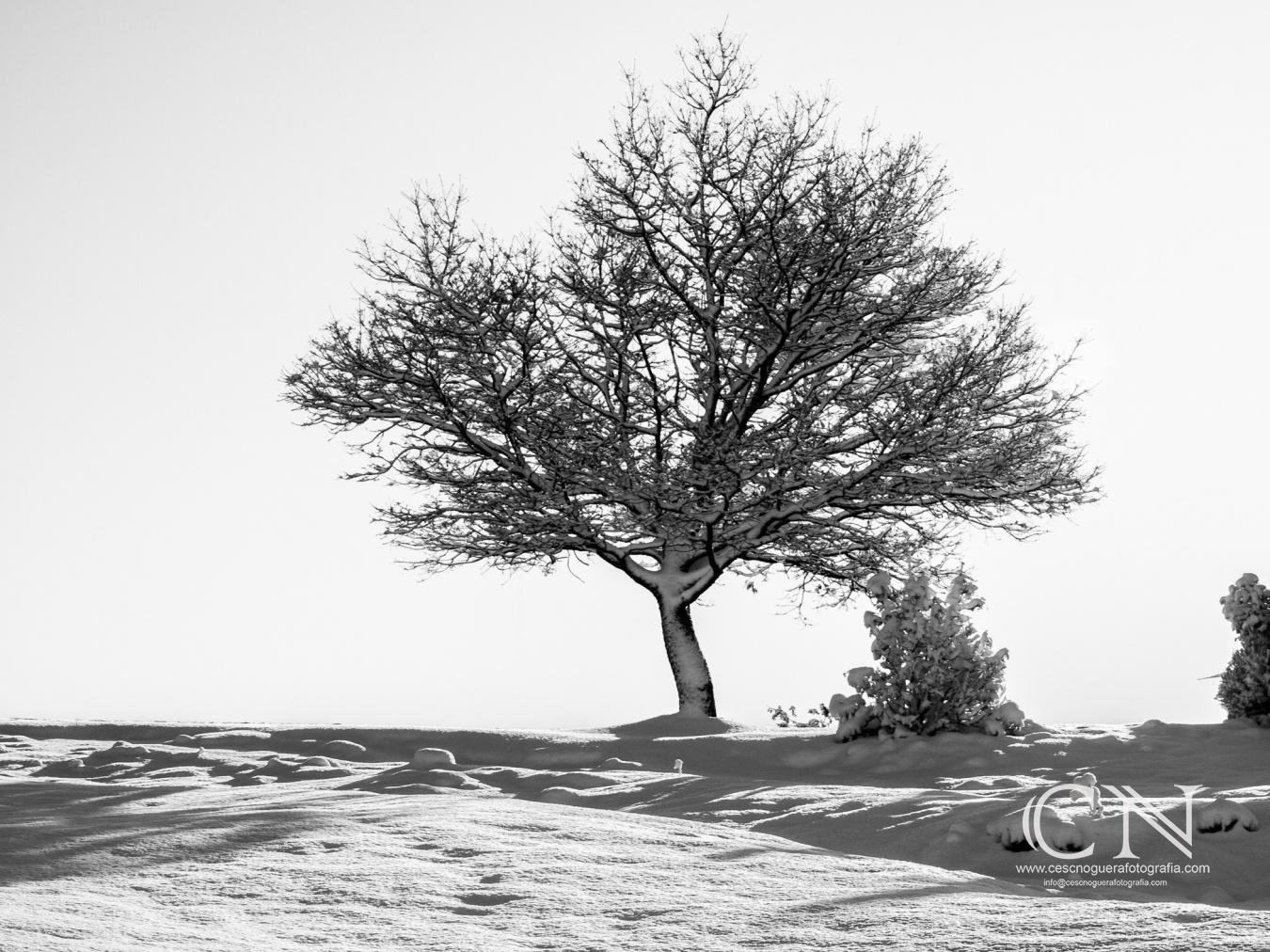 Paisatge i Natura - Cesc Noguera Fotografia, Quan la fotografia és una passió.,  Architectural & Interior design photographer / Landscape Photography.