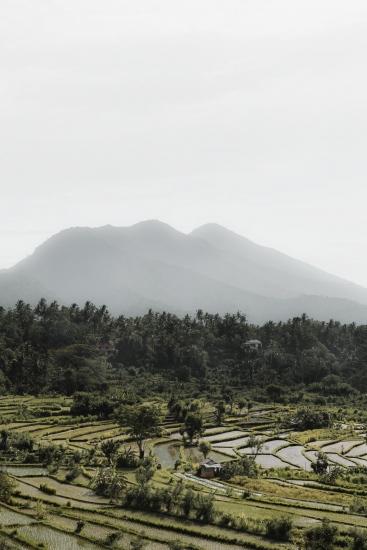 Rice Fields V - Bali (Indonesia)