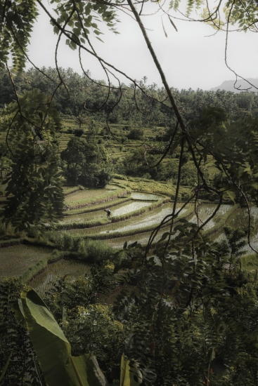 Rice Fields II - Bali (Indonesia)