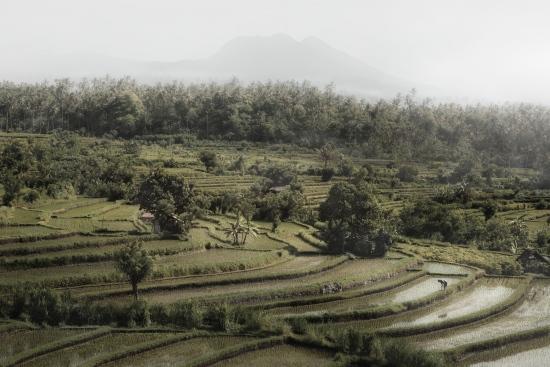 Rice Fields I - Bali (Indonesia)