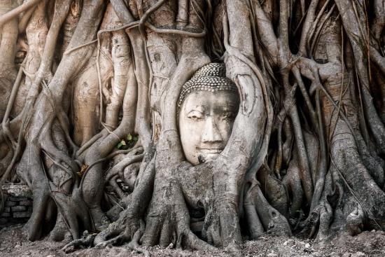 Wat Mahathat | Fotografía de Viaje, Dani Vottero