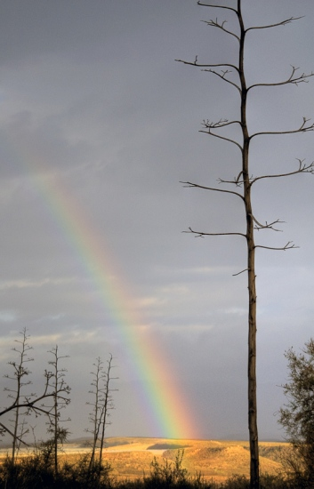 la pita y el arcoiris