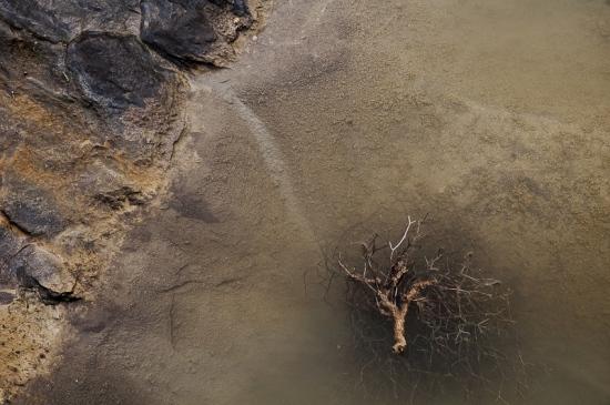 la rama y el agua