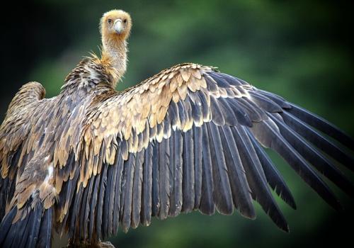Salida fotográfica al Parque Nacional de Monfragüe 1-3 octubre
