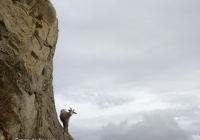 Equilibris - Pirineus