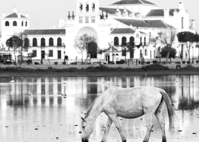 20160202 Doñana - 246