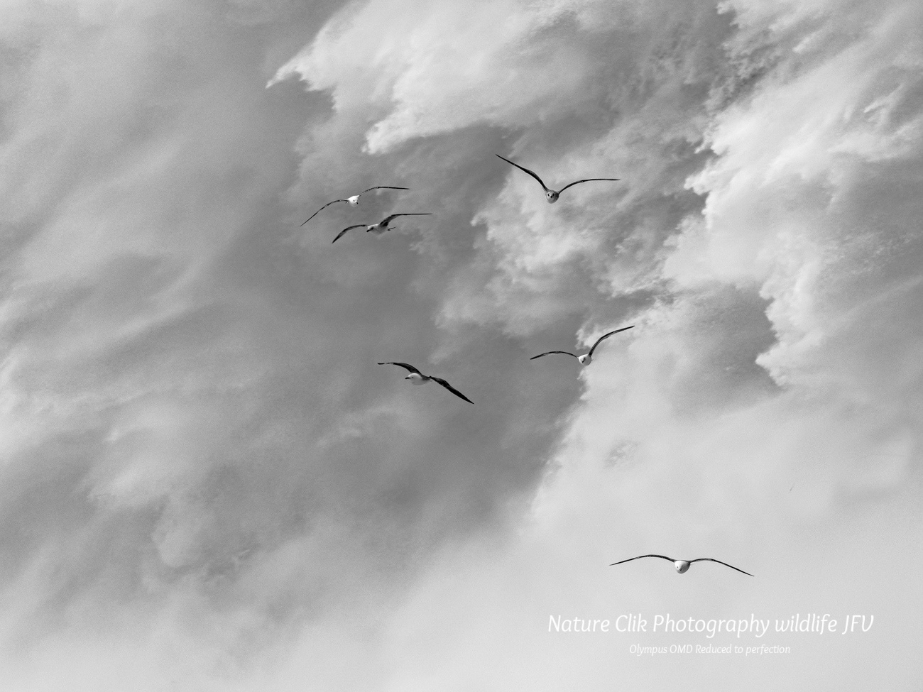 The best - Nature Clik Photography wildlife JFV, Olympus OMD Reduced to perfection