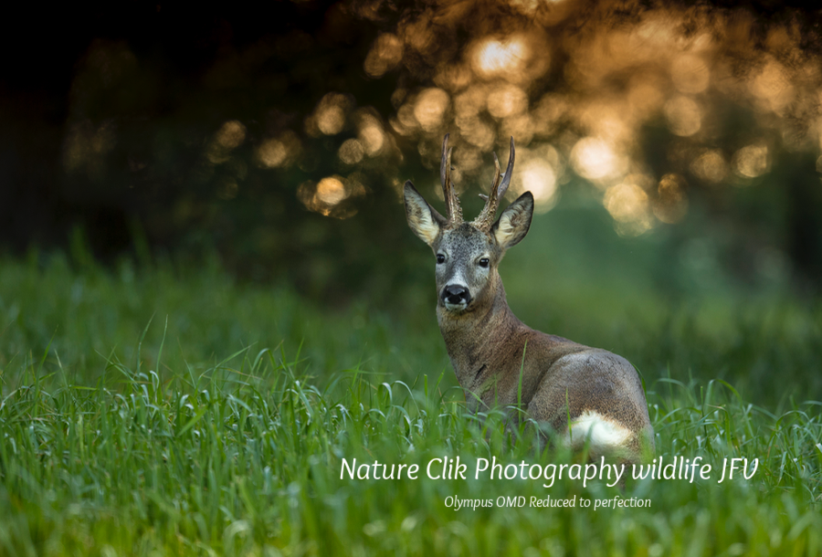 Animals - Nature Clik Photography wildlife JFV, Olympus OMD Reduced to perfection