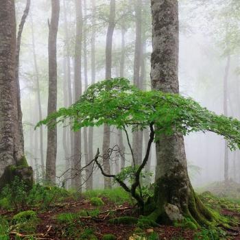 Bosques y ríos