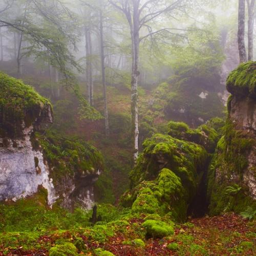 Secretos del bosque