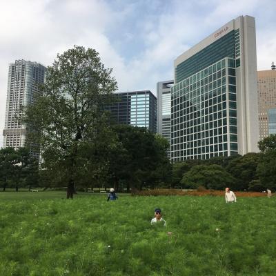 Hamarikyu. Tokio