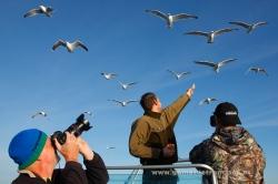 Fotografiando gaviotas. Noruega