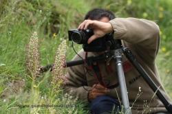 Fotografiando orquídea Himantoglossum hircinum. España