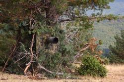 Fotografiando ciervos. España