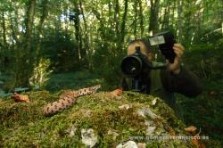 Fotografiando víbora áspid (Vipera aspis). España