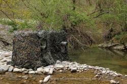 Fotografiando mirlo acuático (Cinclus cinclus). España