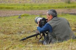 Fotografiando colimbo chico (Gavia stellata). Islandia