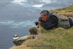 Fotografiando frailecillo común (Fratercula arctica). Islandia