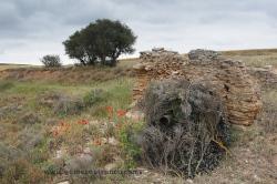 Fotografiando aves esteparias. España