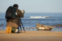 Fotografiando focas. Inglaterra