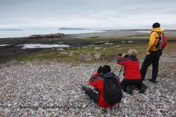Fotografiando morsas (Odobenus rosmarus). Svalbard