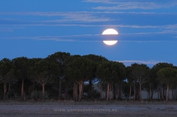 Luna llena en la Reserva Natural de las Lagunas de Villafáfila (Zamora)