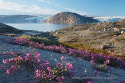Qalerallit, Groenlandia