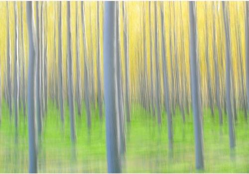 Koldo Badillo  ·  <a target='_blank' href='https://visionnatural.com'>www.visionnatural.com</a>