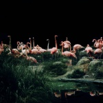 L. Checa / Flamingo Paradise