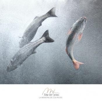 A memoria dos peixes