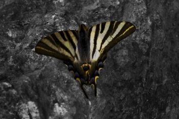 Mariposa   2010   A Coruña, España
