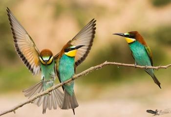Finalista en el Concurso Internacional de Fotografía de Naturaleza Oasis Photo Contest - 2015 (ITALIA) categoría aves