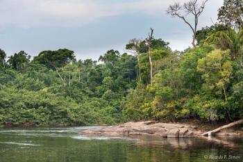 _DSC3020 Selva Amazonica,Brasil