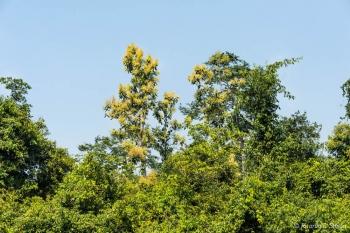 _DSC4646 Selva amazonica, Brasil