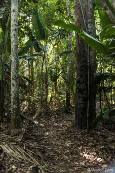 DSC_5756 Selva Amazonica,Brasil