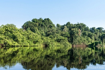 DSC_8945 Selva Amazonica,Brasil