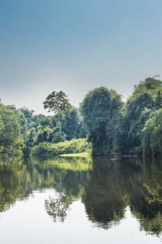 DSC_8981 Selva Amazonica,Brasil