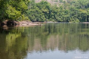 DSC_8989 Selva Amazonica,Brasil