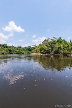 DSC_9004 Selva Amazonica,Brasil