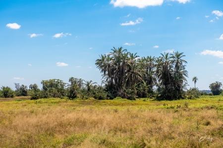 _DSC0110 Africa, Africa V, Ambosseli, Kenya, Paisajes.jpg
