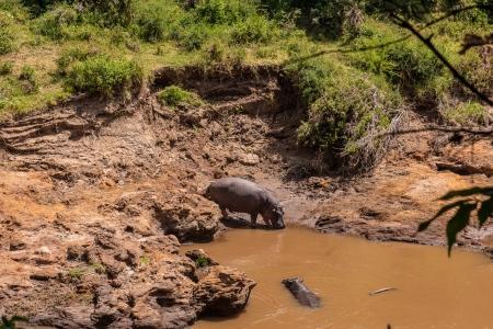 DSC_0316 2 Africa, Africa V, hipopotamo, Kenya, Masai Mara.j