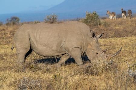 DSC_4623 Africa V, Rinoceronte, Sur Africa.jpg