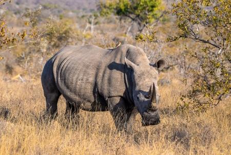 DSC_5123-2 Africa V, Rinoceronte, Sur Africa.jpg