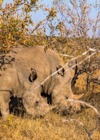DSC_6245 Africa V, Rinoceronte, Sur Africa.jpg