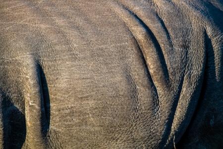 DSC_5364-2 Africa V, Rinoceronte, Sur Africa.jpg