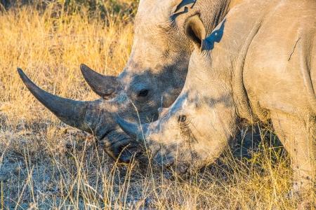 DSC_6465 Africa V, Rinoceronte, Sur Africa.jpg