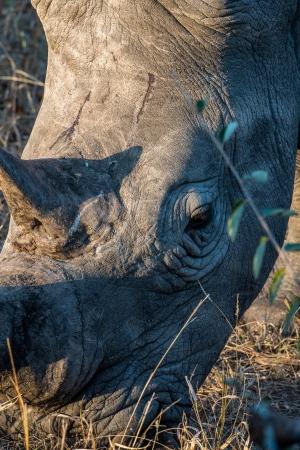 DSC_6501 Africa V, Rinoceronte, Sur Africa.jpg